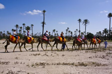 Marrakech Camel Ride in Palm Grove