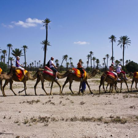 Marrakech Camel Ride in Palm Grove