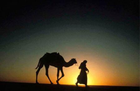 Marrakech Sunset Camel Ride