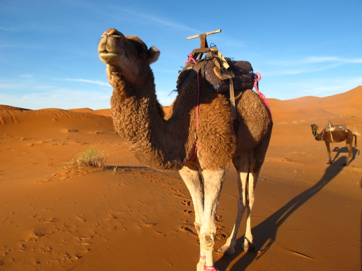 3 Days excursion in the Merzouga Desert